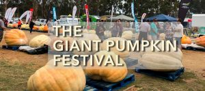 Giant Pumpkin Festival @ South Africa